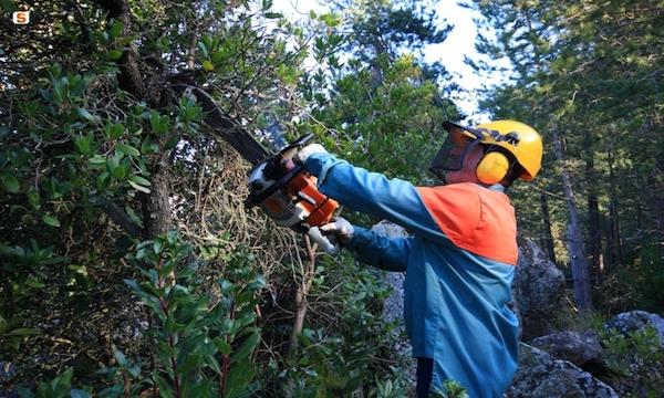 Forestali, dalla Regione 9 milioni per le spettanze arretrate