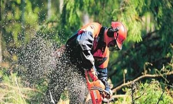 Forestali Otd, la Provincia verso la stabilizzazione di 18 operai
