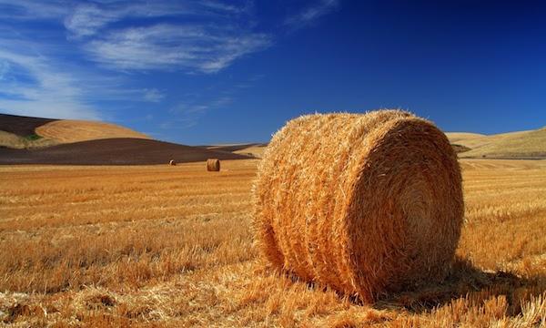 Taglio per le aree montane, sull'agricoltura insorgono Alta Irpinia e Ufita
