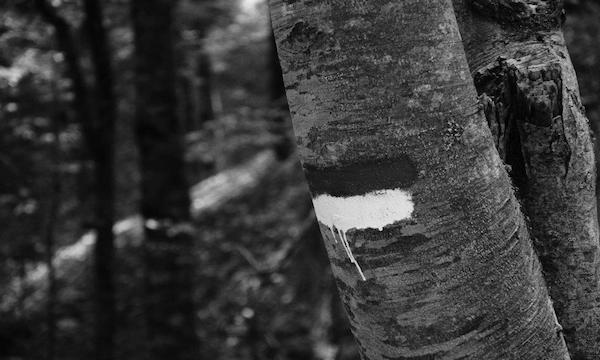 Incendio boschivo colposo: una denuncia a Montella
