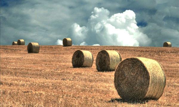 Distretti rurali, approvati 4 progetti in Irpinia