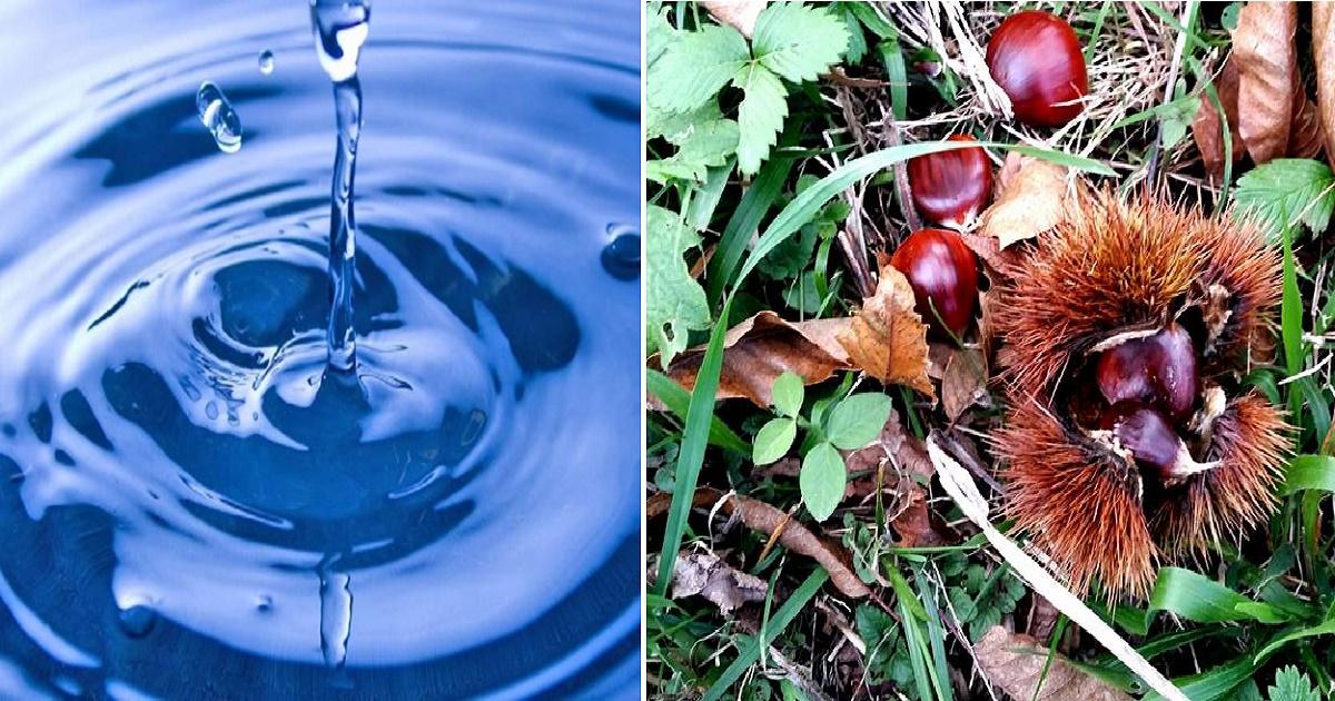 Salva acque e castagne, la Regione approva