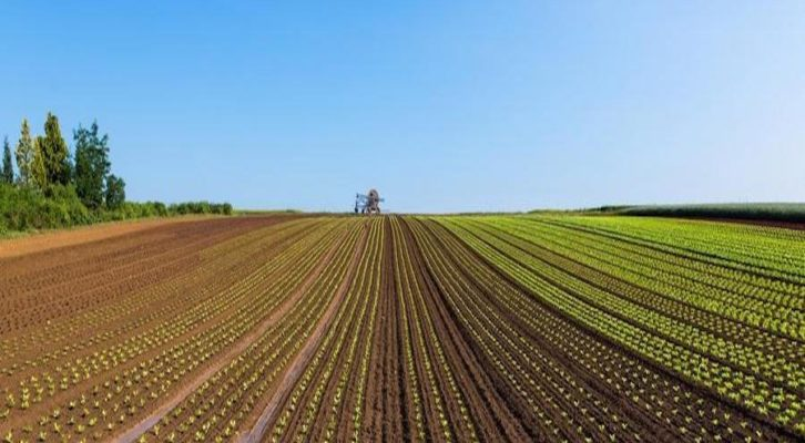 Agricoltura e Pnrr, la Campania chiede 641 milioni al Governo