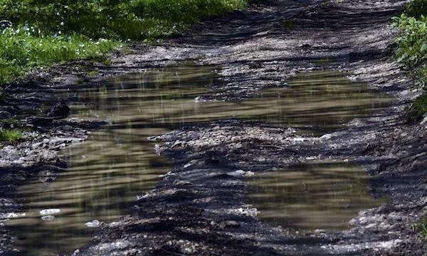 Agricoltura, 20 milioni per riduzione gas e uso dell'acqua