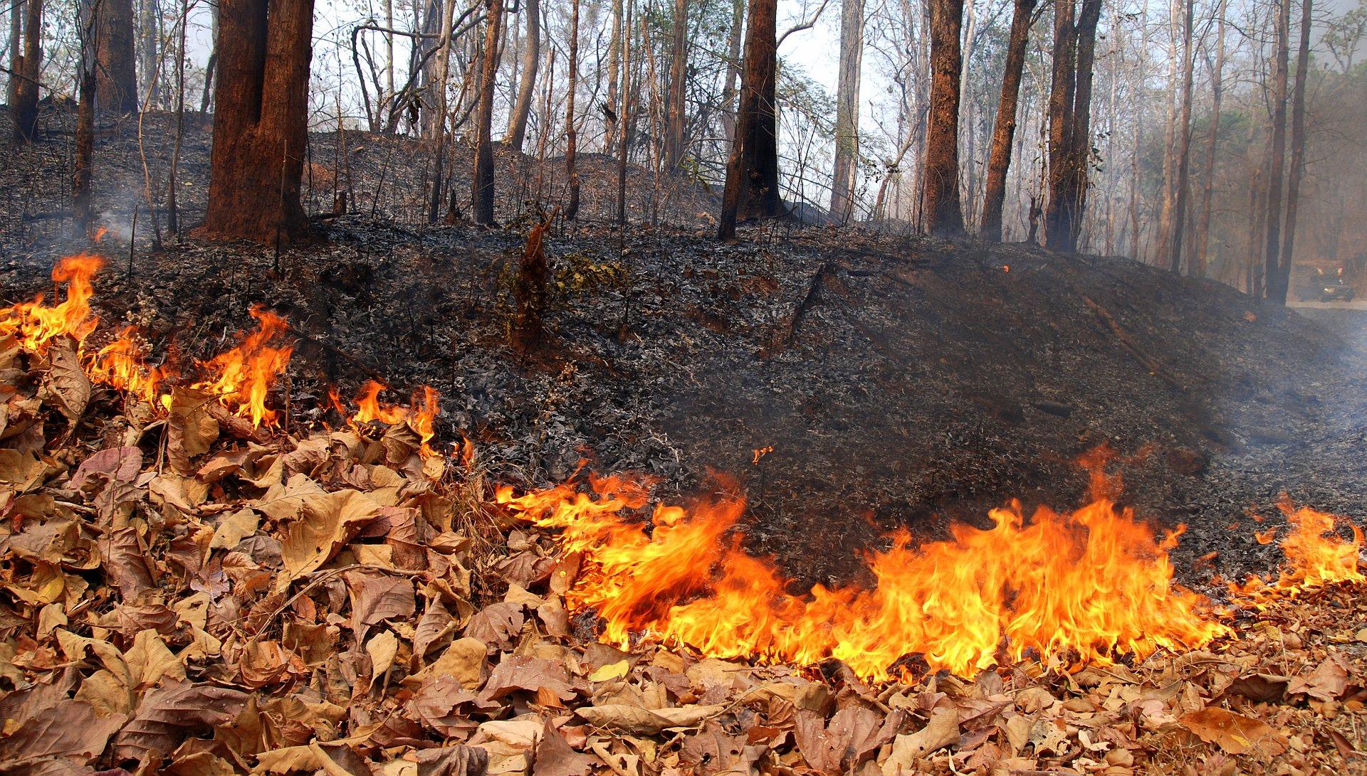 Incendi in Campania: dal 1 luglio c'è lo stato di grave pericolosità