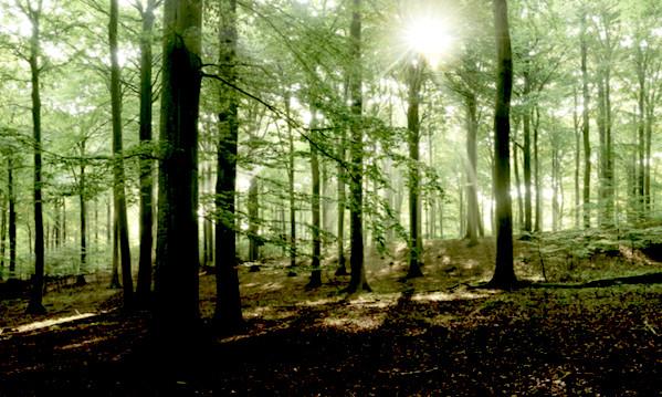 Bagnoli, furto di legna nel bosco: denunciati tre montellesi