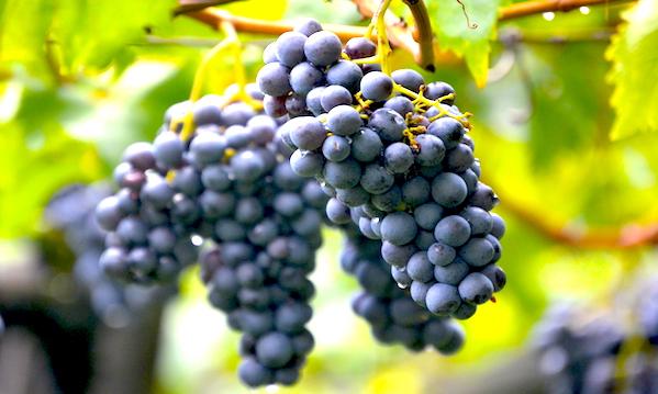 'L'Irpinia tra i territori da vino più interessanti', parola di Stevie Kim