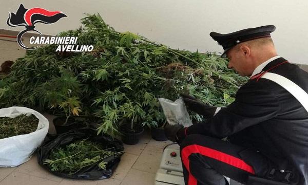 Morra, scoperte 50 piante di cannabis: arrestato giovane
