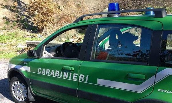 Forestale in azione, da Sant'Angelo dei Lombardi a Monteforte denunce e sanzioni