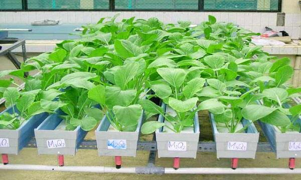 Professionisti uniti per lo sviluppo dell'Irpinia, l'appello degli Agronomi