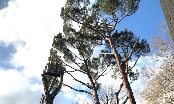 'Fermate la strage degli alberi di Avellino'