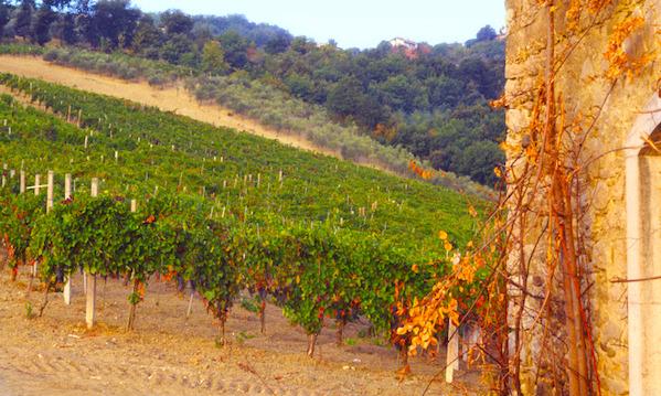 Ciak Irpinia, i grandi vini della Campania in passerella a Montemiletto