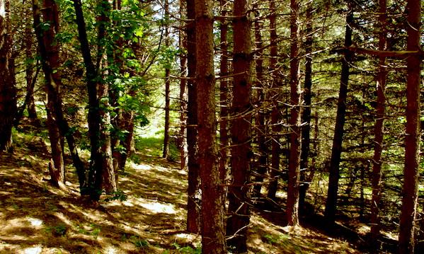 Le foreste, la Iavarone e l'harakiri dell'Alta Irpinia