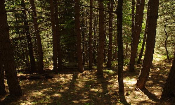 Progetto Pilota, Alta Irpinia all'esame forestazione