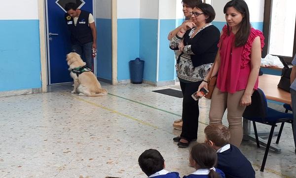 Randagismo e abbandono dei cani, a Montella controlli più severi