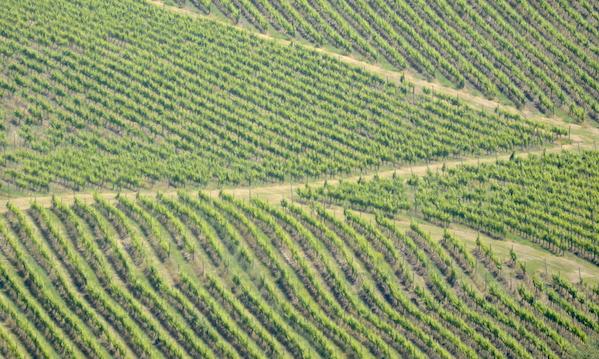 Chianche, Consorzio dei vini d'Irpinia contro il biodigestore