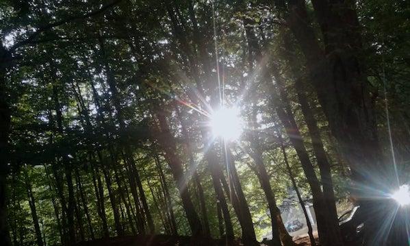 Alta Irpinia: piano foreste, tregua tra i sindaci