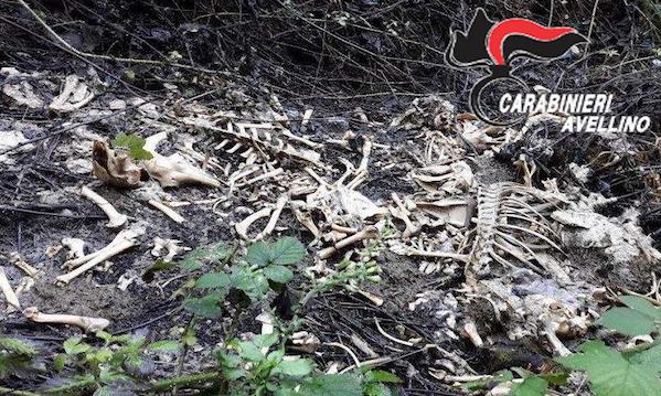 Carcasse di animali scoperte a Volturara: microchip recuperati, indagini serrate