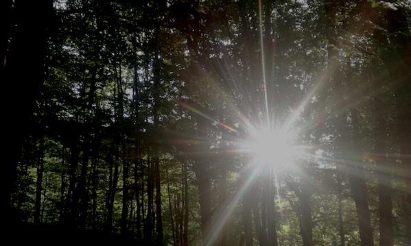 Forestazione: dubbi e certezze per l'Alta Irpinia
