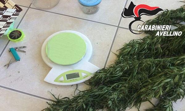 Mirabella, piantagione di cannabis in casa: un arresto