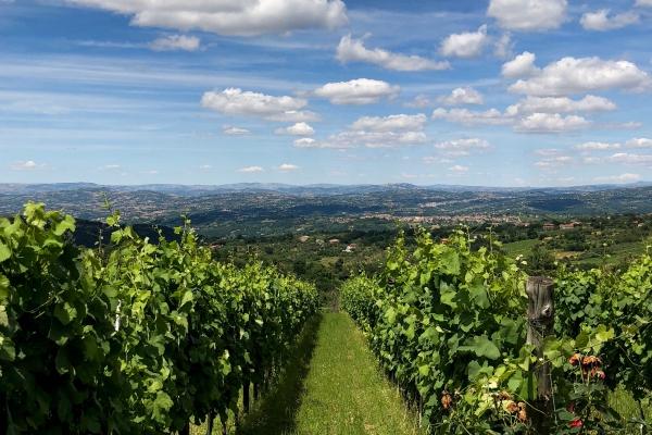 Festa del vino e del turismo, Terre D'Aione tra le tappe