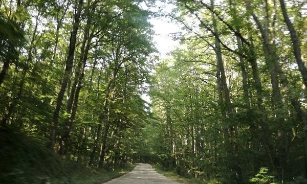 Caposele: tagliano bosco in area protetta, denunciati