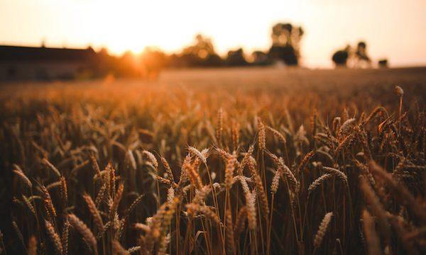 Distretti rurali e agroalimentari, Petracca: 'Grande occasione per l'Irpinia'