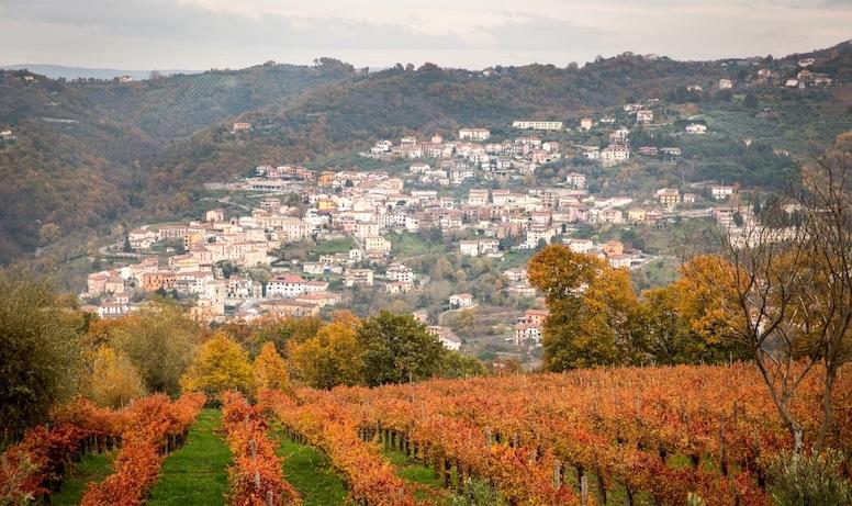 Progetto Pilota, il vino è la strategia di Castelfranci