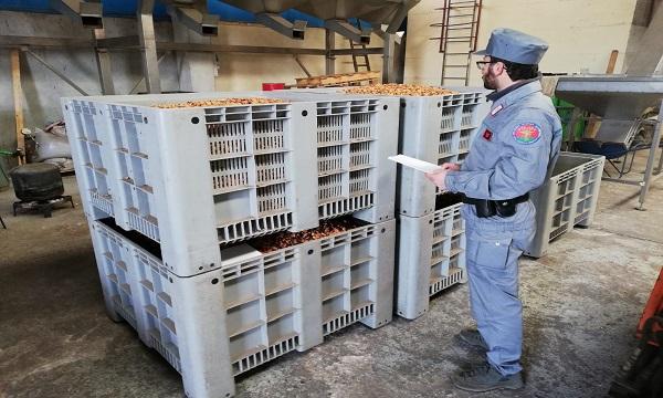 Castagne, nocciole e baccalà: maxi sequestro tra Montella e Mercogliano