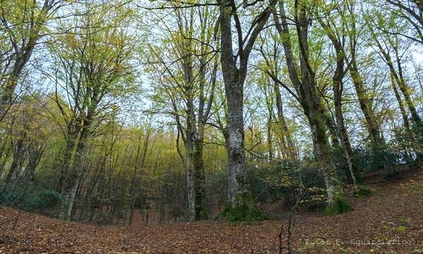 Luci in altura, a Lioni arte e suoni nel bosco di Gavitoni