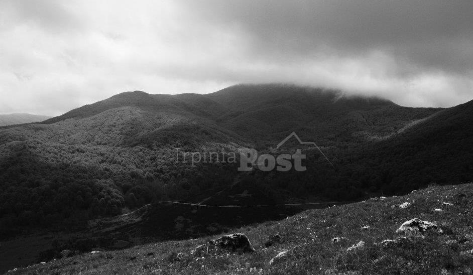 Azienda forestale Alta Irpinia, adesioni aperte fino al 31 luglio