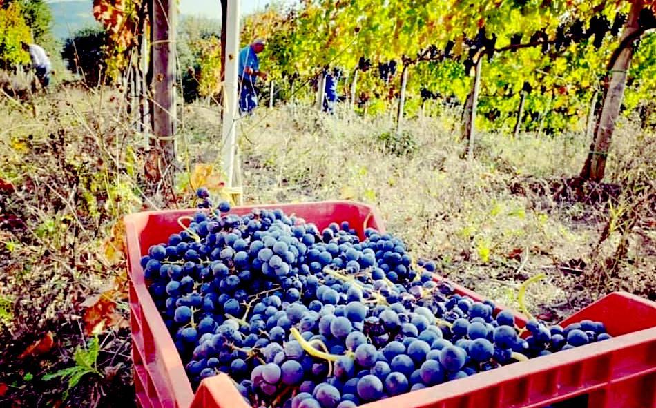 Il distretto del vino, convegno Coldiretti a Taurasi