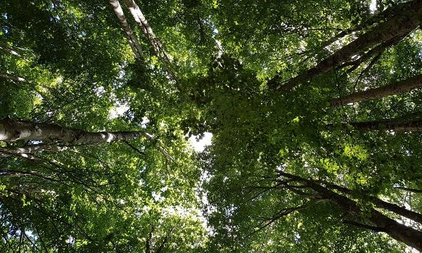 Patrimonio forestale, webinar per l'Alta Irpinia