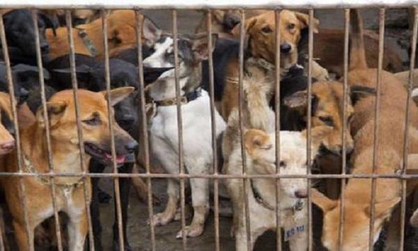 Castelfranci, 15 cani in un recinto: due denunce