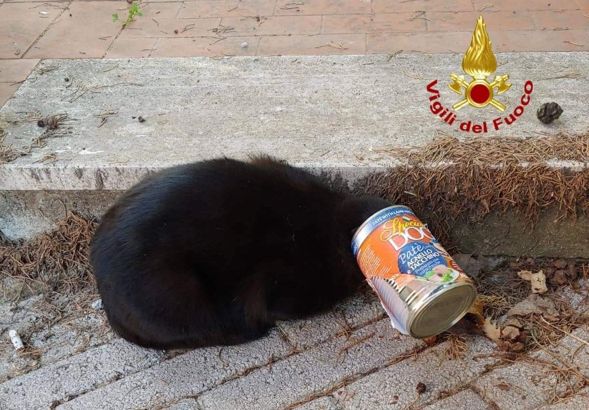 Ariano, gattino salvato dai Vigili del fuoco