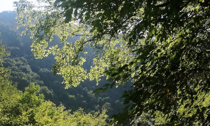 Lanciata l'agenzia forestale dell'Alta Irpinia: 'Oggi si parte e non si torna indietro'