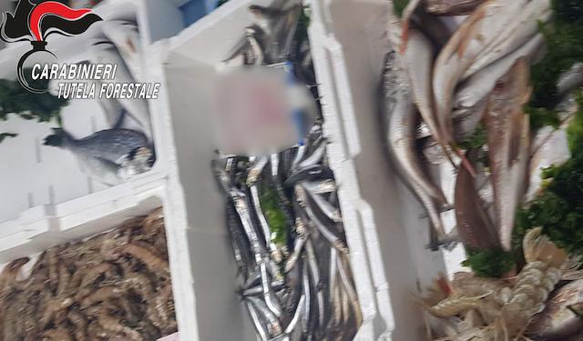 Montemarano: pesce e legumi privi di tracciabilità, multe per 8mila euro