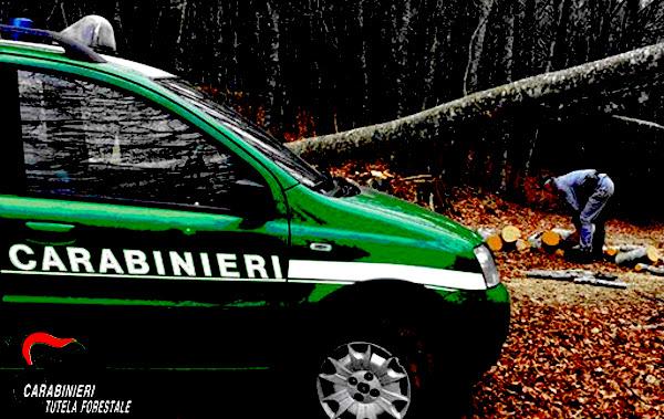Forestale, raffica di sanzioni in Irpinia