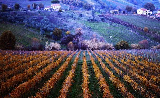 Città europea del Vino, per il Sannio un anno da incorniciare