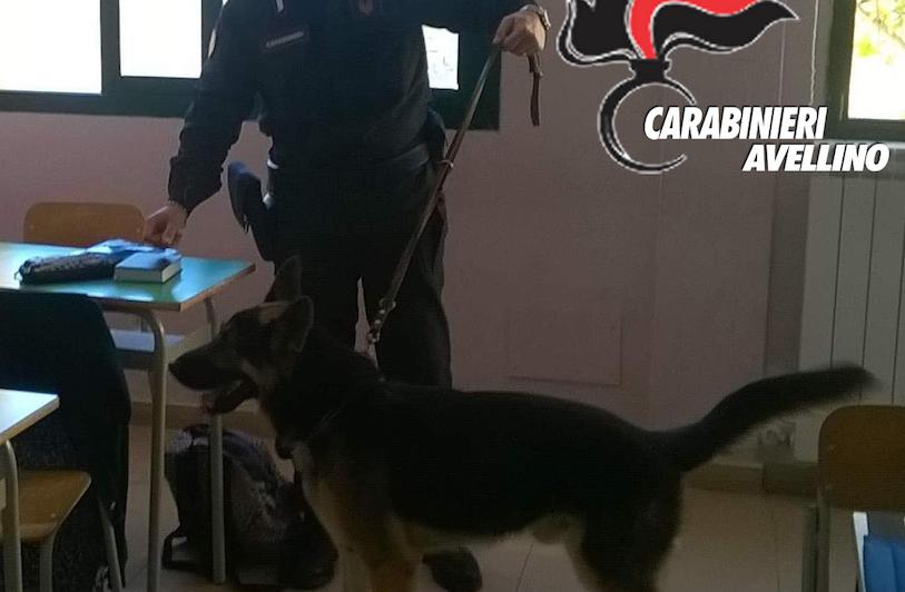 Calitri, carabinieri sequestrano marijuana a scuola