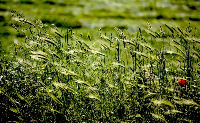 Da Vallesaccarda a Caposele, l'agroalimentare irpino in 10 appuntamenti
