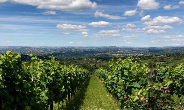 Wine trekking a Lapio, a cavallo nel borgo del Fiano