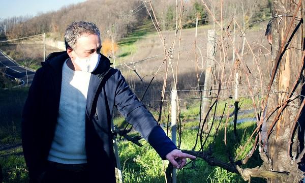 Vini, corsi di potatura. Di Marzo: 'Qualità contro prezzi al ribasso'