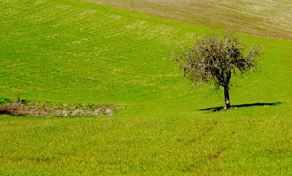 Agricoltura, a Montella incentivi per i giovani